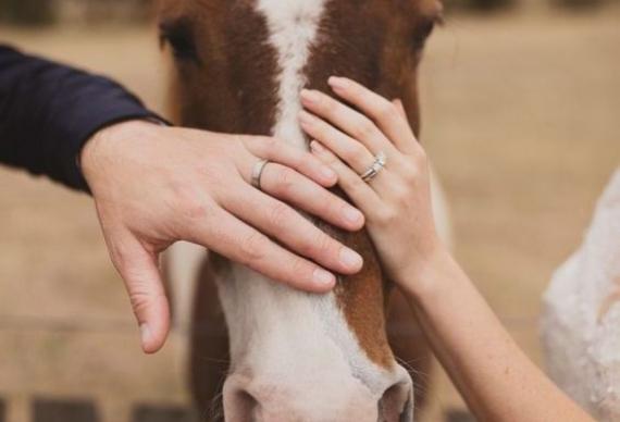молодожены руки с кольцами на лошади